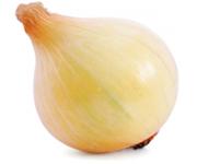 Uprawa i nawożenie cebuli