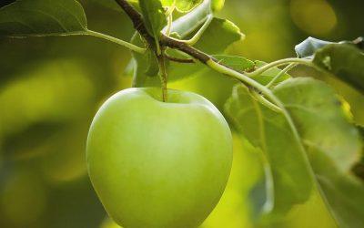 Nawożenie dolistne wapniem w sadzie – bez chloru i azotanów