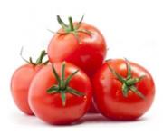 Uprawa i nawożenie pomidora