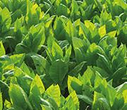Uprawa i nawożenie łąk i pastwisk